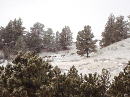 Touchstone Ranch Elk 01