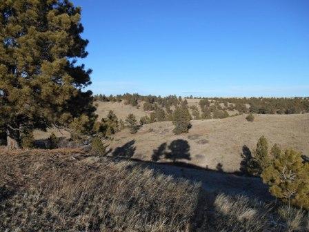 MLS Ranch