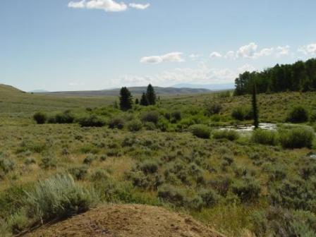 Little Jack Creek Ranch Blog
