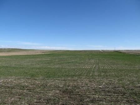 Schwartz Dryland